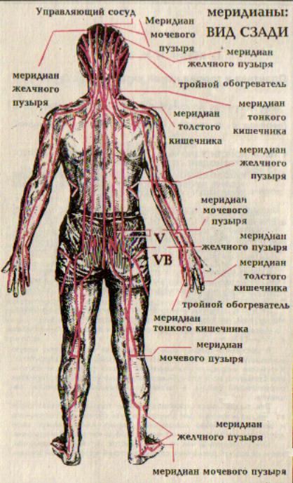 Акупунктурные меридианы: вид